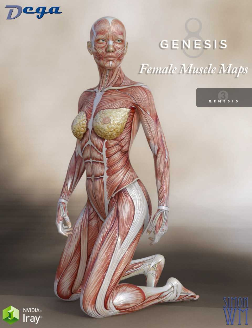Muscle Maps For Genesis 3 and 8 Females