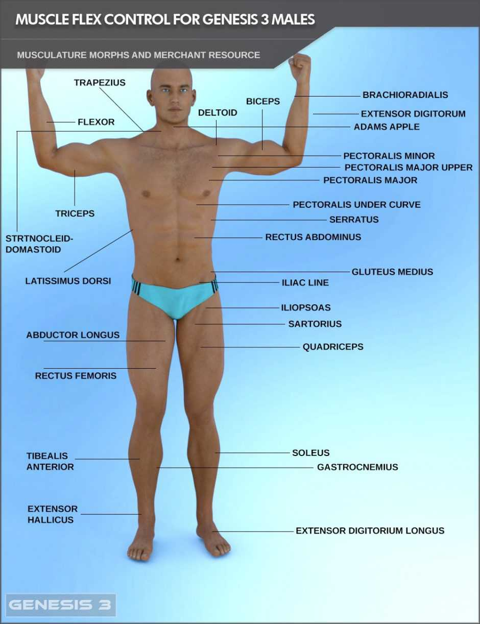 Muscle Flex Control for Genesis 3 Males and Merchant Resource